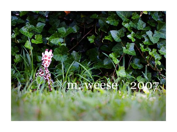 web-105.jpg