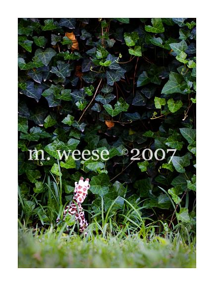 web-104.jpg